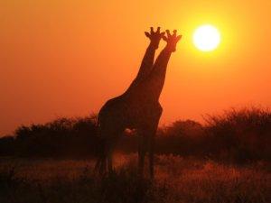 Sudáfrica 4 - Tour Idiomas